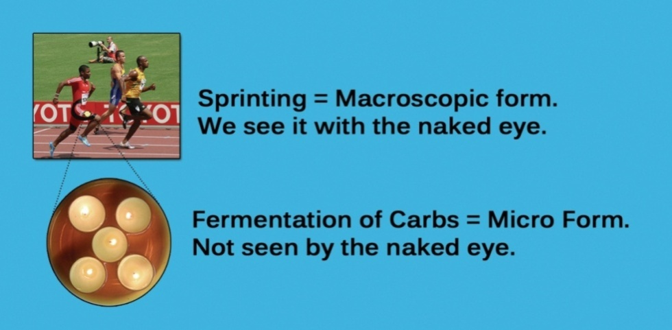 sprint-ferment