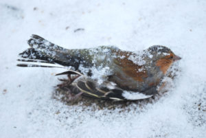 3-dead-frozen-bird
