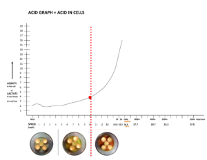 You should only see this text in lightbox popup Where are Carbohydrates Stored in the Body, and How Much is Stored? MUSCLES of MEN and WOMEN: Men and women store carbohydrates - renamed glycogen - primarily in muscles. On a so-called normal carb diet (CHO diet) a woman stores almost 300g total glycogen in her body and a man stores 400g total. LIVER: The liver is like a spare gasoline tank for the body to store carbs; it stores approximately 50g glycogen in both men and women. * The main reason for storing glycogen in muscles is for when you exercise hard - your muscles cells have stored fuel on-site - so there is no delay to deliver fuel and sustain high intensity exercise. HOW IS GLYCOGEN MADE IN THE BODY?