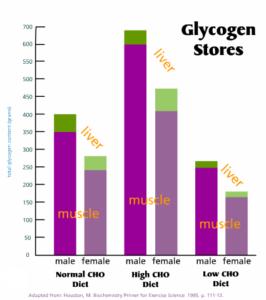 glycogen-stores