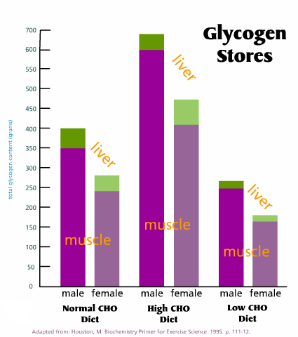 Image result for glycogen stores