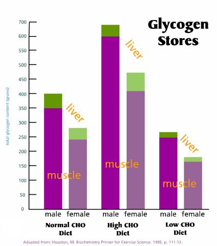 Week 1: Glycogen Storage, Depletion and Repletion. | PhysicalRules.com