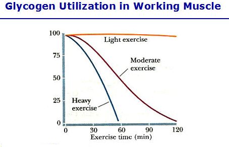 Substrate utilization during exercise in active people dating