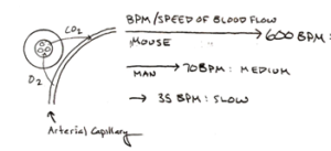 speed-blood-flow