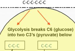 glucose-splits