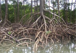 3 portal-tree-roots