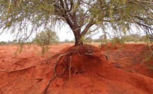 4 portal-tree-roots-2