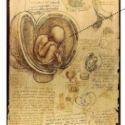 DaVinci Fetus Womb Oxygen